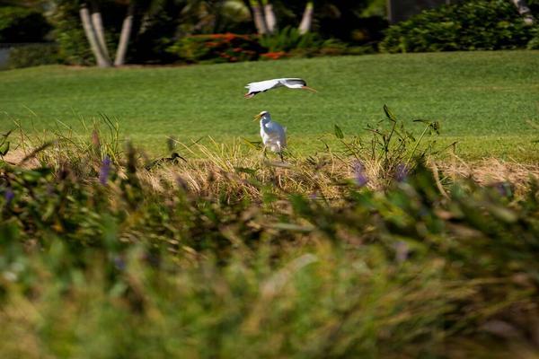 West Palm Beach Golf Course Membership